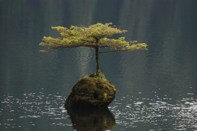 lone-tree-in-fairy-lake