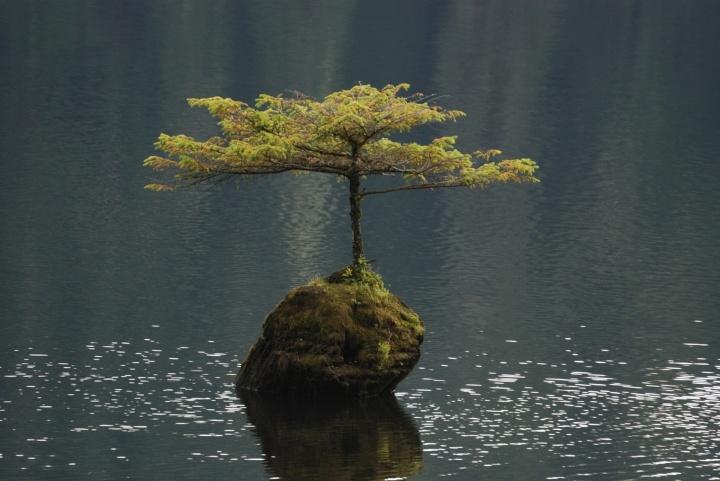 lone-tree-in-fairy-lake